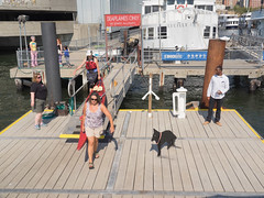 2015 Rose Pitonof Open Water Swim - Lower Manhattan to Coney Island, New York City (jag9889) Tags: nyc newyorkcity people usa ny newyork les swim river unitedstates outdoor manhattan unitedstatesofamerica lowereastside eastriver swimmer athlete lowermanhattan waterway openwater 2015 urbanswim rosepitonof jag9889 20150815 openwaterswimevent