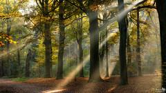Another one of those beautiful autumn morning (BraCom (Bram)) Tags: autumn trees holland leaves forest automne canon bomen estate path widescreen herbst herfst pad nederland blad otoño nl bergenopzoom sunrays 169 bos autunno noordbrabant potofgold landgoed zonnestralen canonef24105mm bracom canoneos5dmkiii bramvanbroekhoven estatelievensberg