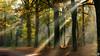 Another one of those beautiful autumn morning (BraCom (Bram)) Tags: autumn trees holland leaves forest automne canon bomen estate path widescreen herbst herfst pad nederland blad otoño nl bergenopzoom sunrays 169 bos autunno noordbrabant potofgold landgoed zonnestralen canonef24105mm bracom canoneos5dmkiii bramvanbroekhoven estatelievensberg
