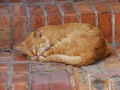 nap (Lalallallala) Tags: travel italy cat italia syracuse siracusa archeologicalpark matka
