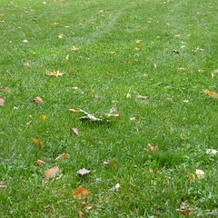New York - Central Park Lawn (Moro972) Tags: park nyc travel autumn parco usa ny newyork color verde green texture grass leaves foglie day colore earth centralpark manhattan lawn meadow ground erba autunno prato giorno 2015 ivebeenhere sonostatoqui