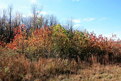Kentucky Color (Pictures and Pastimes) Tags: kentucky colorsofautumn autumn2015
