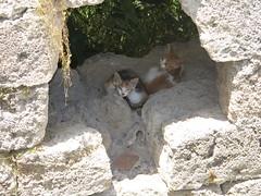 Harbour Cats. (JohnnyDalmas) Tags: cats kittens greece stray rhodes mandraki rhodos