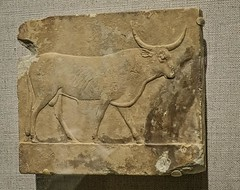 Votive Relief of a bull Egypt Ptolemaic Period 304-30 BCE Limestone (mharrsch) Tags: animal ancient egypt maryland baltimore bull relief 4thcenturybce votive waltersartmuseum 1stcenturybce 3rdcenturybce 2ndcenturybce ptolemaicperiod mharrsch