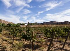 Valle de Guadalupe wine region, Baja, Mexico