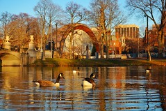 IMG_4976.JPG ((Jessica)) Tags: boston ma golden geese massachusetts charlesriver newengland backbay goldenhour pw