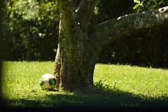 Vivid dream (Wagner Cardia) Tags: tree brasil soccer bola arvore rs futebol petrobras cepe esteio