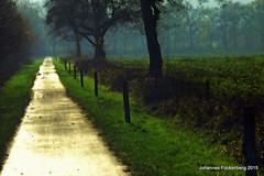 Der Weg (grafenhans) Tags: nebel sony natur alpha tamron landschaft weg a700 alpha700 grafenwald 281750