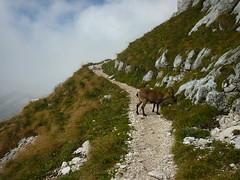 12 settembre 2015 - Cima di Terrarossa (panorama dreamers) Tags: friuli friaul montasio sellanevea alpigiulie tarvisiano