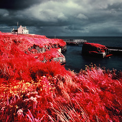 The Port of Ness (Mark Rowell) Tags: portofness isleoflewis scotland aerochrome ir eir infrared kodak hasselblad 903 swc 6x6 120 mediumformat expired film
