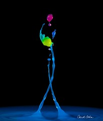 _DNZ8934-Three-valve-twist-lighter-vib (Carol Cohn) Tags: water watersculpture splash splashphotography waterdrops drops droplets liquid liquidsculpture liquidballet highspeedphotography macro tropfen gotas graceful