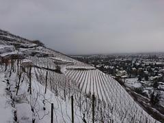 Weinberge Radebeul (Fotos von Helmut) Tags: radebeul weinberge winter schnee