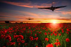 POP0031 (Smart Aviation Art) Tags: poppy poppies poppyfield poppyfields lancaster vulcan avro spitfire hurricane aircraft military bbmf