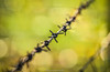 Barbed (f.renxh) Tags: sigma af 70200mm f28 ex os hsm barbed wire bokeh canon 70d eos telephotolens woodland rural danger metal texture sharp colourful depthoffield