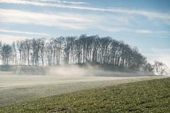 A9900511_s (AndiP66) Tags: winterstimmung nebel fog mist sun sonne sunrays sonnenstrahlen wolfisberg kantonbern cantonofberne hills hügel winter sony sonyalpha 99markii 99ii 99m2 a99ii alpha ilca99m2 slta99ii sigma24105mmf4dghsmart sigma 24105mm f4 amount andreaspeters