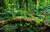 Waipoua Forest, North Island, New Zealand (klauslang99) Tags: ferntrees nationalpark nature naturereserve newzealand nobody nonurbanscene northisland northland outdoors photography rainforest tree tropicalclimate tropicaltree waipouaforest klauslang