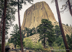Devils Tower close up (danilew) Tags: 2016 adobe bearlodgemountains blackhillsnationalforest devilstowernationalmonument lightroomcc mergetohdr september summer usa wyoming buttes danilew daylight flora foliage ground hdr hdrphotography highdynamicrange highdynamicrangephotography land landforms landscape landscapephotography monolith morning mount mountain mountains nature outdoors overcast plants ridges rockformation rockformations scenery summertime towers trees wwwdanilewcom devilstower 1680mmf284gvr nikkor nikon1680f284 nikon d500 nikond500
