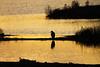 Sunset Sentinel (shaftina©tion) Tags: ardeacinerea bird gray grey greyheronardeacinerea avian backlight backlit beautiful black dark evening feathers golden lastlight longshadows orange outline paulfarnfieldcom purple rays rimlighting rimlit shadow shape silhouette sundown sunset uplifting