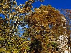 mazamet memories (4) (canecrabe) Tags: temple protestant mazamet tarn clocher arbre templeneuf abandon