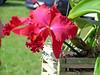 Orchid (soniaadammurray - Off) Tags: digitalphotography flower orchid nature beauty quintaflower