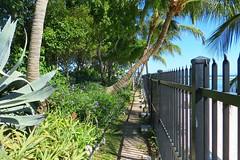 Key West (Florida) Trip 2016 1794Rif 4x6 (edgarandron - Busy!) Tags: florida keys floridakeys keywest higgsbeach keywestgardenclub