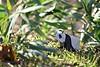 Panda ( origami ) (Adri 79) Tags: origami paper adrianodavanzo adri79 panda lokta rice canon7dmarkii samyang135mmf2edumc yootaeyong