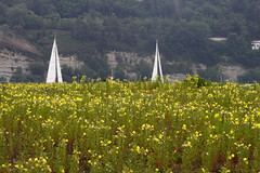 Mettre les voiles (jchaffaux) Tags: jaune fleur voile paysbasque