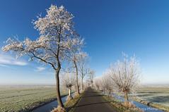 Frosty trees in winter sun (Johan Konz) Tags: winter rural road blue sky white frozen trees outdoor landscape grass field serene atmosphere nikon d90 purmerland waterland netherlands tree watercourse