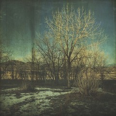 light from above (jssteak) Tags: canon t1i tree morning winter snow light colorado aged grunge vintage