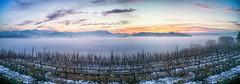 Panoramica nebbiosa su Mondovi Piazza e arco alpino (claudio g) Tags: mondovì piazza belvedere nebbia fog vigna vigne uva vine tramonto landscape sunset barolo dolcetto nebbiolo garzegna