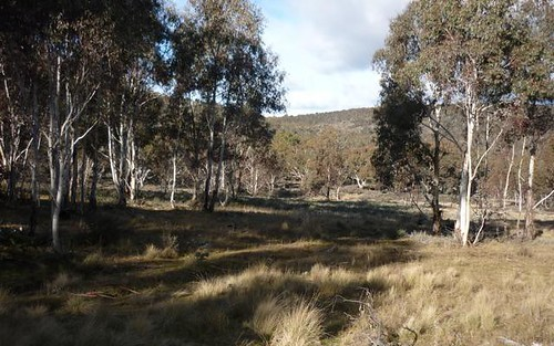 Lot 128, Ashvale Road, Adaminaby NSW 2629