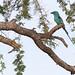 Uganda Bird
