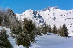 Ringelspitz im Winter (torremundo) Tags: landschaften berge winter feldisalpdaveuldenrundweg graubünden schweiz