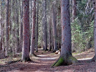 Brown-Lowery Provincial Park - Trees and trail