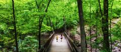 Siblings (Boreal Bird) Tags: green siblings forestpath siblinglove highbanks woodedpath maryamerman