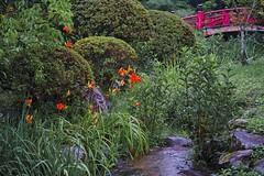 Japanese garden (Lillakanarie) Tags: flowers japan nara sigmadp3quattro