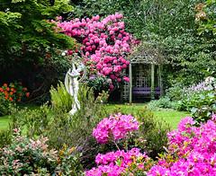 Not Just Birds at Birdworld, England, UK (Beardy Vulcan) Tags: england flower birds statue garden spring may gazebo surrey bloom farnham birdworld 2015 rhododendronroseum