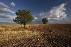 Almendros (anpegom) Tags: arboles cielo nubes arado almendros surcos camposdecastilla volteo 1635vr