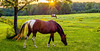 Beautiful  horse on the pasture at sunset in south carolina mountains (DigiDreamGrafix.com) Tags: trees sunset summer sky horse sun mountains nature beautiful field grass animal rural fence outdoors evening bright bluegrass farm vibrant country scenic southcarolina running domestic pasture agriculture equestrian