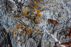 Rock and leaves (ngawangchodron) Tags: canada bc victoria vancouverisland royalroadsuniversity colwood sun18oct