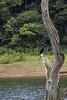"Cormoran (_Galle_ (instagram: galle_foto)) Tags: republica park lake bird birds miguel angel cormorants lago photography photo asia republic foto photos south kerala pájaros national fotos sur fotografia galle hindu hinduism fotógrafo hindi thekkady pájaro periyar fotografía photograper cormoranes cormoran gallego inidia भारत periyarnationalpark hindou republicofindia phalacrocoracidae hindú ""republic hinduismo भारतगणराज्य गणराज्य gaṇarājya cheral pájaritos bhārat bhāratgaṇarājya miguelagallego miguelgallego miguelangelgallego repíblicadelaindia cheralam"