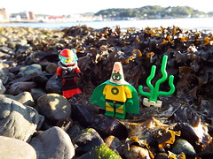 I'M NOT A RARE SEA SPONGE! (Paranoid from suffolk) Tags: seaweed beach scotland lego stones patrick pebbles oban minifigs 2015 minifigures argyllandbute
