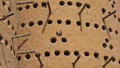 Doha (Murad Yuzbashov) Tags: bird nest dove doha qatar whitedove dovenest nestfordove