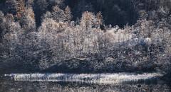 Frost - D8D_4417 (Viggo Johansen) Tags: trees lake water frost rime telemark birk haukeli cild vgsli