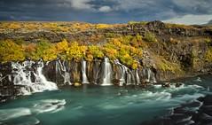 Hraunfossar (loveexploring) Tags: longexposure autumn cloud fall river landscape lava waterfall iceland falls shrub hraunfossar hvita autumncolour