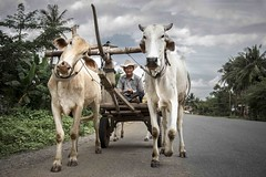 The Chariot (Roberto Pazzi Photography) Tags: road street travel portrait sky people cloud man tree smile hat animal wheel rural asian photography countryside cow asia cambodia khmer adult outdoor fulllength culture streetphotography farmer chariot oneperson