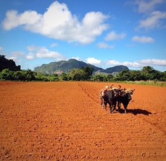 Our tour in #Viales #Cuba  for you #Hiking #Horseriding #Climbing and more CasaVinales.jimdo.com Book your  #COHIBA Farm (Casa Particular Vinales) Tags: hiking cuba climbing horseriding cohiba viales