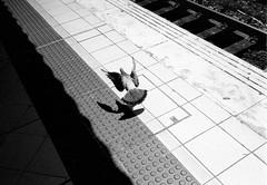 Test shot 1 of 2 (MrSatoshi) Tags: blackandwhite 35mm streetphotography 1600 push filmphotography fomapan bessar2a foma400