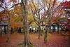 At the end of autumn (tez-guitar) Tags: bridge autumn autum 紅葉 autumn leaves tree trees red carpet wood forest garden temple kyoto pentax pentaxart