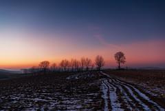 Winter Evening (Mirek Pruchnicki) Tags: hnatkowice województwopodkarpackie polska winter snow night trees sky frost fields